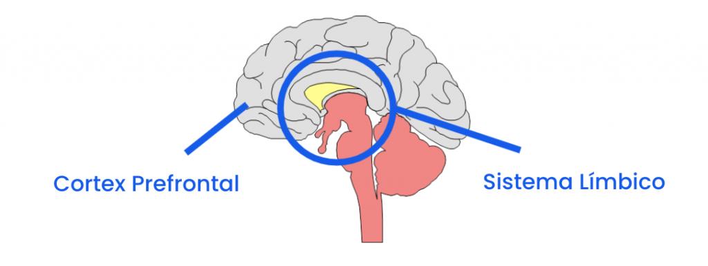 áreas del cerebro afectadas en las adicciones